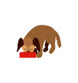 flat sdrink from bowl dog pet icon vector image