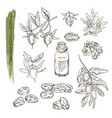 set of jojoba elements realistic sketch of vector image vector image