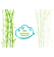 Bamboo asian backdrop vector image