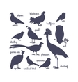 bird silhouettes isolated on white vector image vector image