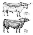 Farm cattle bulls and cows different breeds of