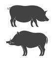Pig Boar vector image vector image