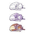 Sketch cat sleeping curled up vector image vector image
