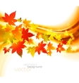 autumnal leaf of maple vector image vector image