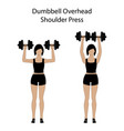 dumbbell overhead shoulder press exercise vector image vector image