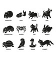 pet shop set silhouette types of pets vector image vector image