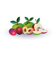 plum apple fruit on white background healthy vector image
