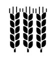 Wheat icon sign on isolate vector image