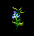 colorful glowing blue flower modern ornamental vector image vector image