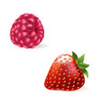 a juicy raspberry and vector image vector image