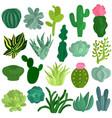 cacti succulents plants flat set vector image