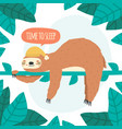 cute sleeping sloth lazy sloth hanging on tree vector image vector image