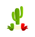 mexican cactus on a white vector image