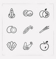 set of vitamin icons line style symbols with leek vector image vector image
