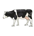 The white and black cow is grazed vector image