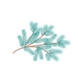 blue pine branch fir tree branch vector image vector image