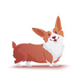 happy dog welsh corgi style flat vector image