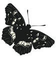black butterfly design vector image vector image