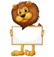 blank sign template with wild lion on white vector image vector image