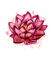 lotus flower isolated on white vector image vector image