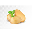 realistic potato with leaf and potato flowers vector image vector image