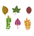 autumn colored leaves vector image