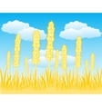 Field with ripe wheat vector image