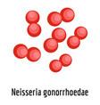 neisseria gonorrhoedae icon cartoon style vector image vector image