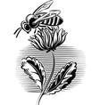 worker bee on a flower vector image vector image