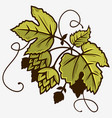 beer hop branch with leaves graphic vector image vector image
