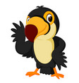 cartoon bird toucan posing vector image vector image