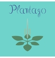 flat on background plant Plantago vector image