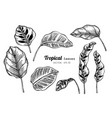 collection set of tropical leaves drawing vector image