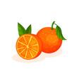 delicious juicy oranges on a vector image