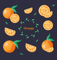 set fresh orange vector image vector image