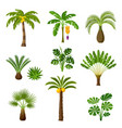 tropical palm trees set exotic tropical plants vector image vector image