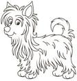 little funny australian silky terrier vector image