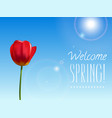 spring background with tulip vector image vector image