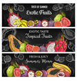tropical fruits sketch banners vector image vector image