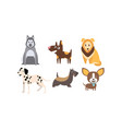 dogs different breeds set cute pets domestic vector image