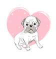 pug dog cartoon cute friendly fat chubby fawn vector image vector image