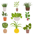 set of homemade green plants in colorful pots vector image