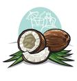 coconuts vector image vector image