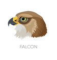falcon gorgeous profile with sharp beak and green vector image