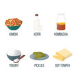 set food with probiotics healthy food style vector image vector image