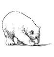 sketch walking polar bear cub