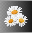 stock realistic daisy vector image vector image