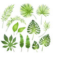 tropical palm leaves jungle exotic leaf palm vector image vector image