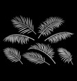 tropical set palm leaves vector image