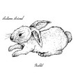 autumn animal hand drawn of bunny rabbit vector image vector image